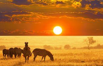 Afrika Safari Turları