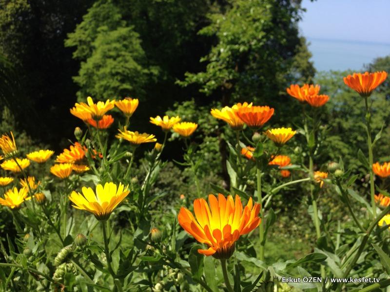 Batum Botanik Parkı gezisi