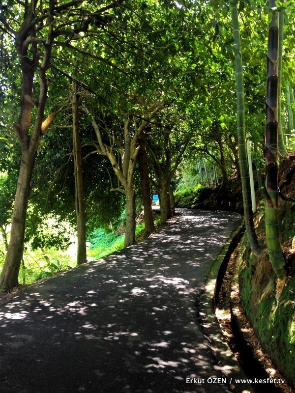 Batum botanik park