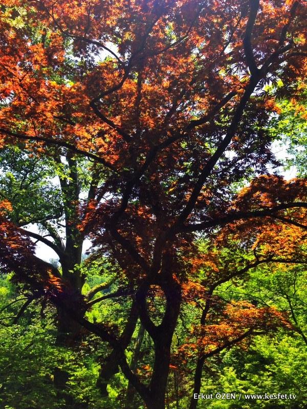 botanik parkı renkler