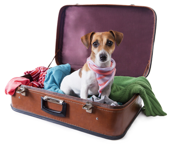 Uçakta evcil hayvan bulundurmak