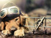 uçakta evcil hayvan
