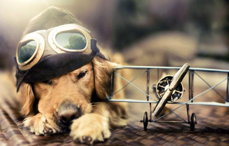 Uçakta evcil hayvan ile