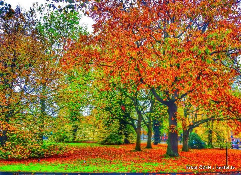 oldenburg sonbahar fotoğrafları