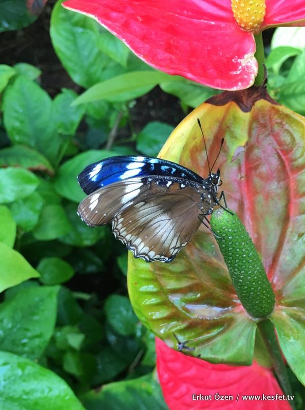 konya-tropikal-kelebekler-bahcesi-giris-fiyatlari