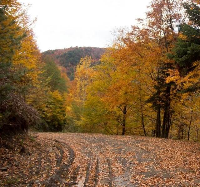 Sonbahar Kamp Alanları Yenice Ormanı