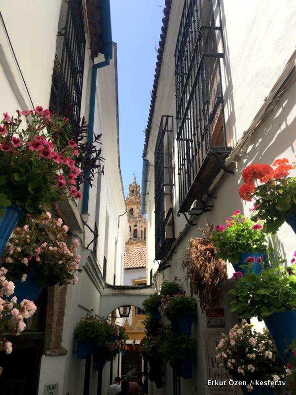 Cordoba gezi rehberi çiçekler