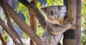 Hayvanat Bahçeleri Canlı Yayın