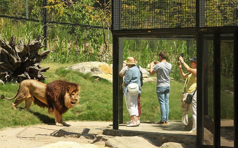 Hayvanat Bahçeleri Melbourne
