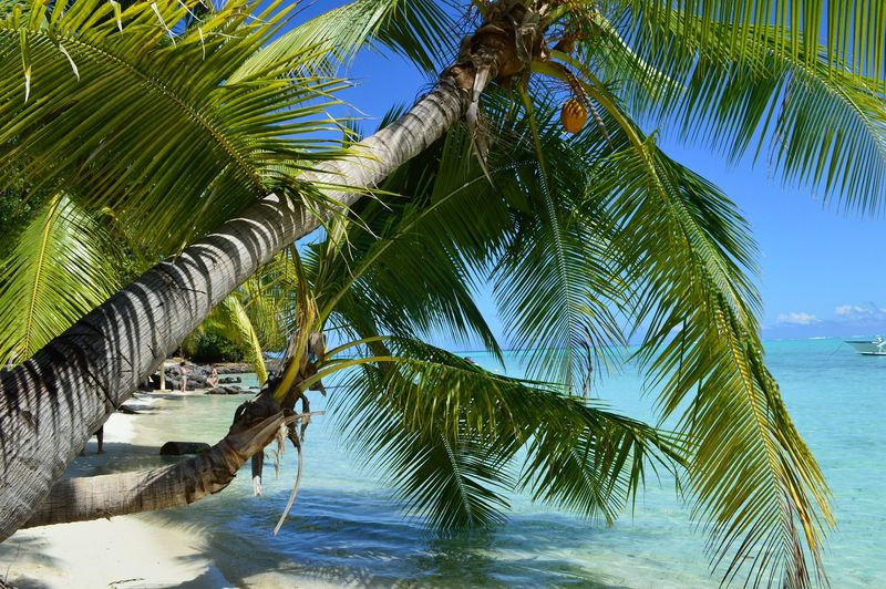 Egzotik Bora Bora