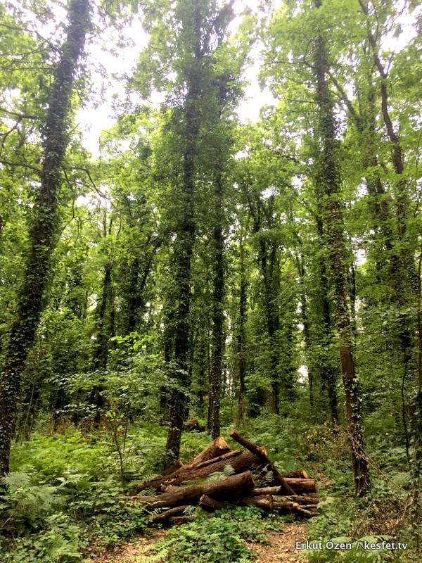 Avcı Koru Ormanı
